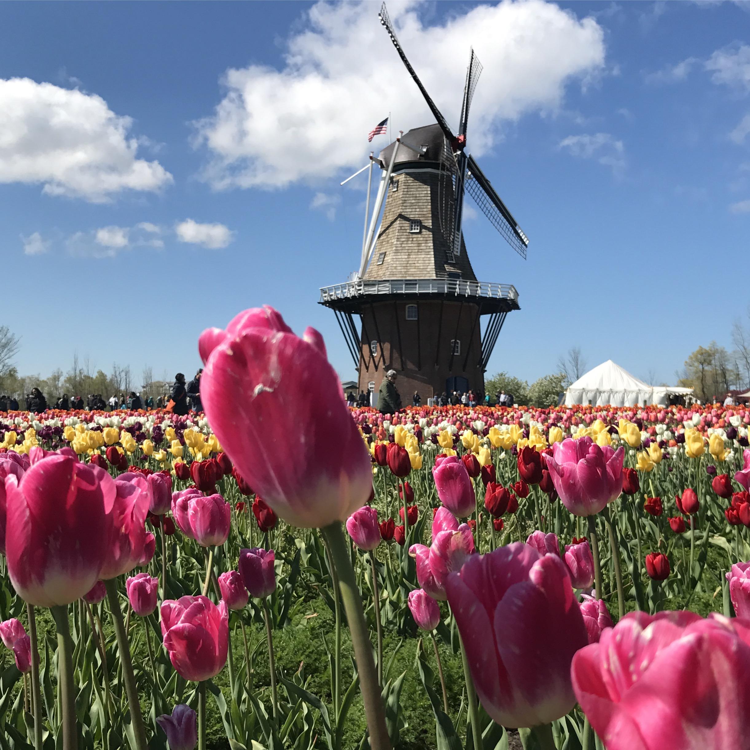 Michigan Tulip Fetival